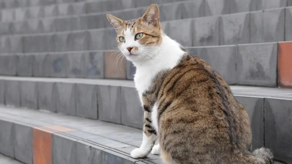 احذر تربية القطط في المنازل خطر