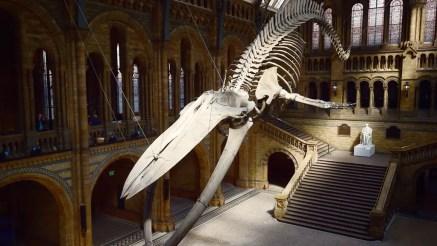 متحف بريطاني