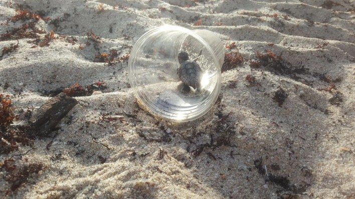 المخلفات البلاستيكية المنتشرة بالمحيطات تخنق الحياة البحرية