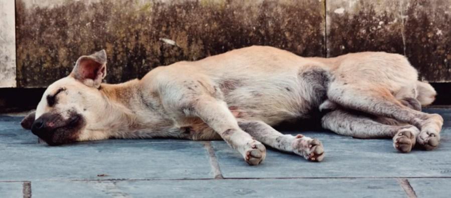 abandono animal