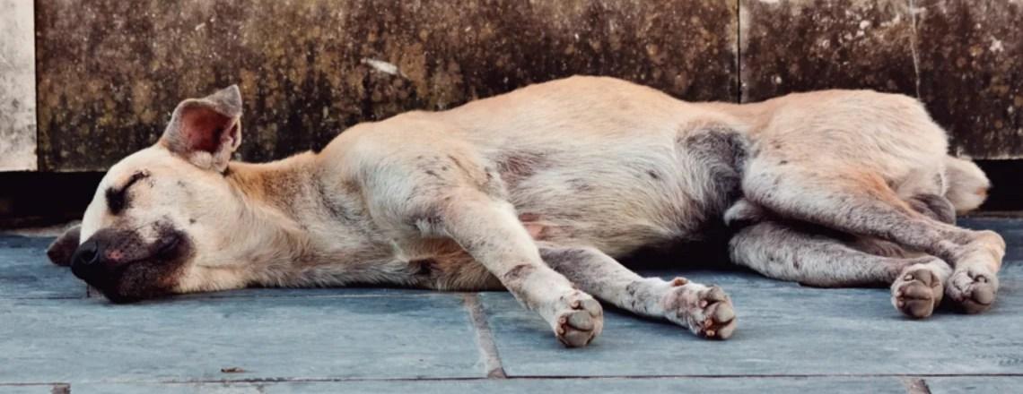 Abandono animal – Conocerlo para evitarlo