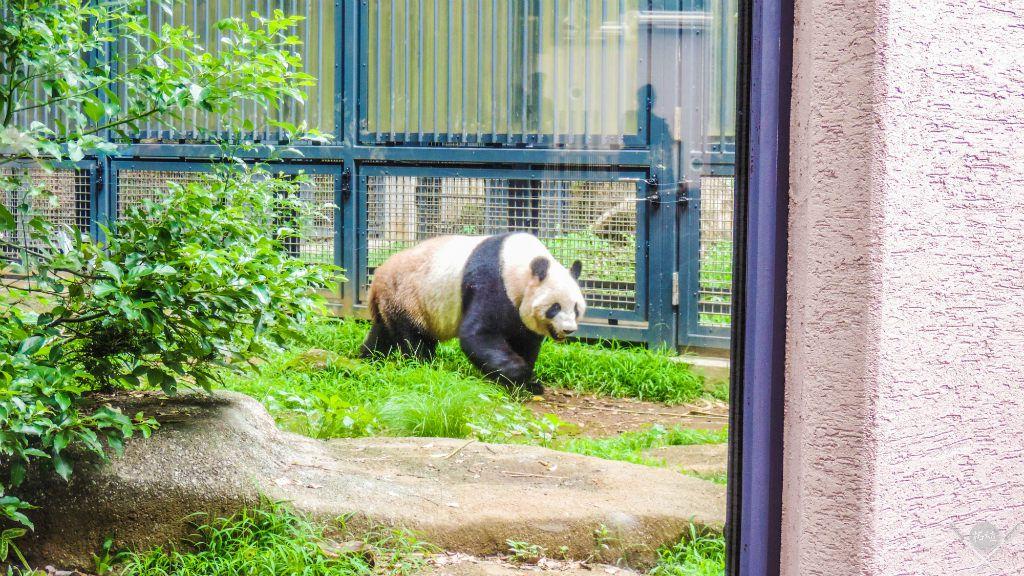 Japão_Tokyo_Ueno-Zoo