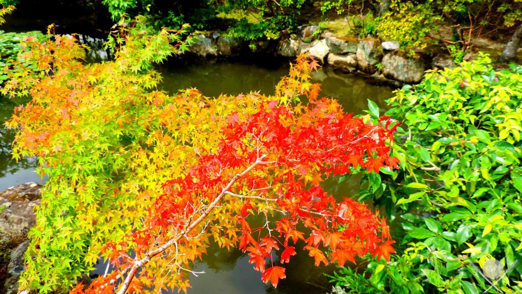 Nara - Isuien Garden folhas outono