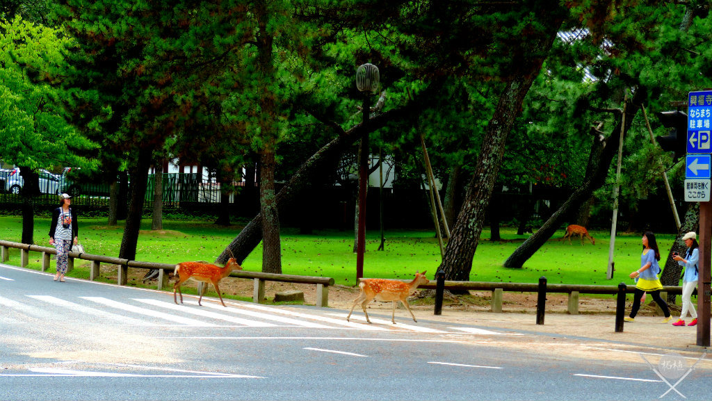 Bambis atravessando a rua