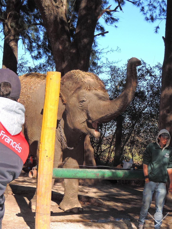 Buenos Aires - Zoo lujan elefante