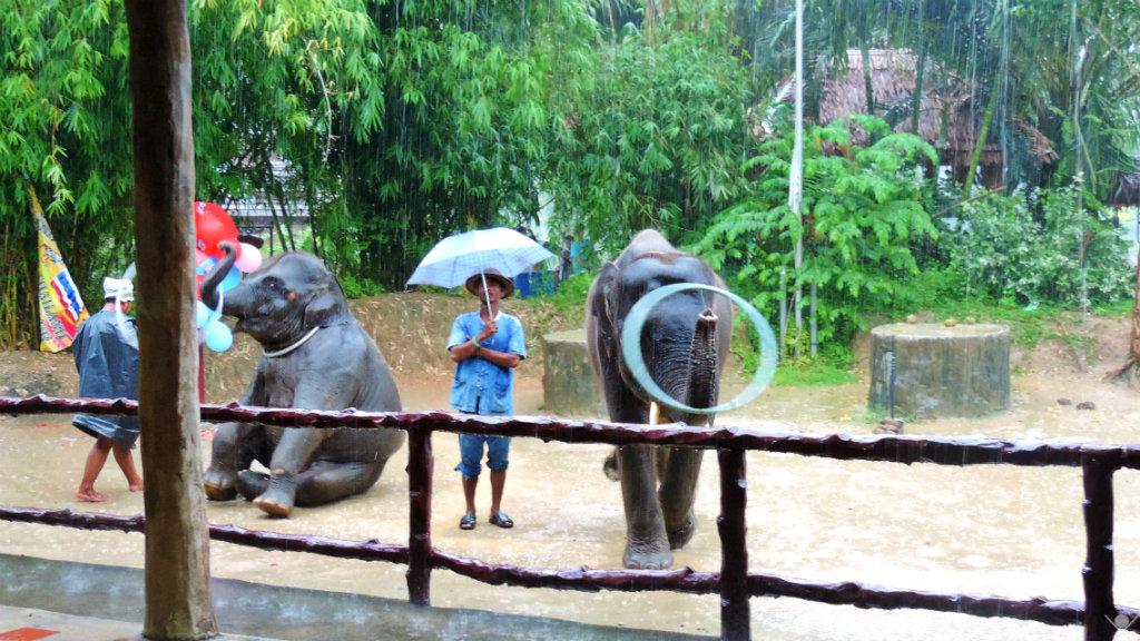 Thailand - Phuket - Safari Elefantes - Vida de Tsuge - VDT - 1024x576