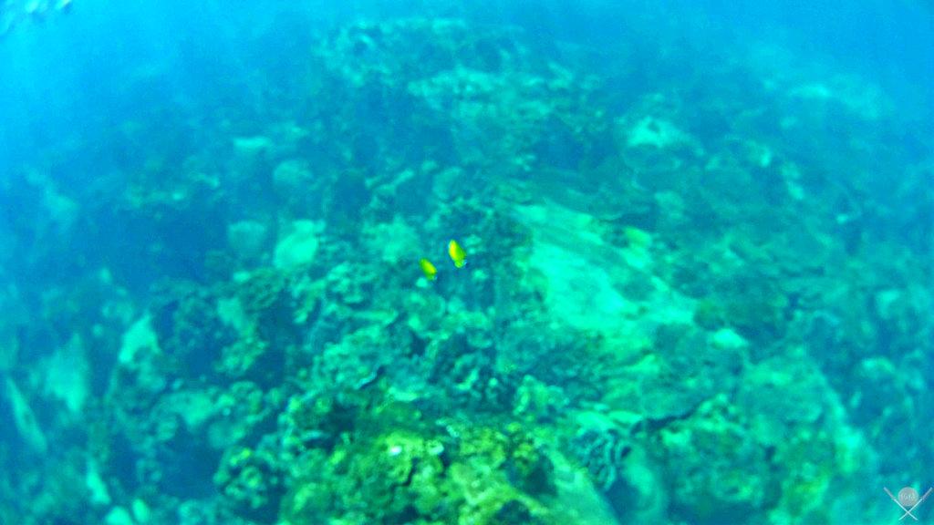 Thailand - Koh Tao - Snorkeling - Viagens - Vida de Tsuge - VDT
