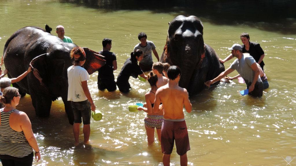 Thailand - Chiang Mai - Elephant Trekking Care 3 - Viagens - Vida de Tsuge - VDT