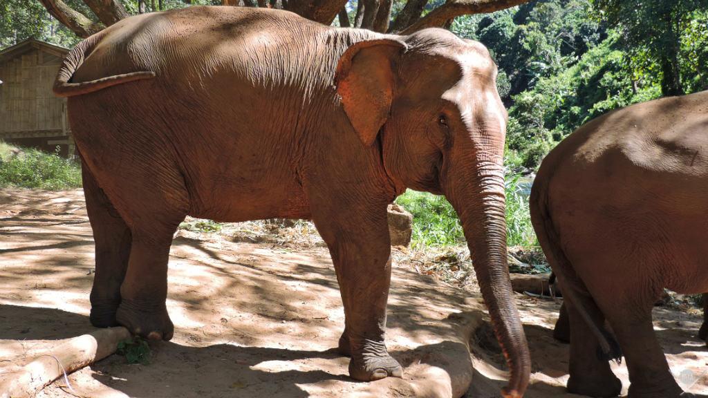Thailand - Chiang Mai - Pata Elefante - Viagens - Vida de Tsuge - VDT