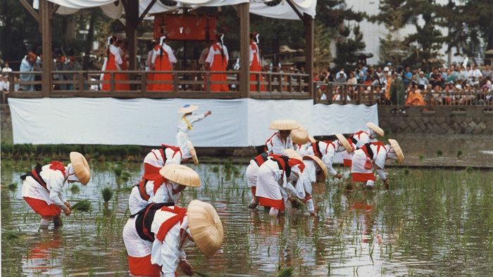 Rice-planting-m_183129-jnto_Equinócio-da-Primavera-no-Japão-10-dicas-do-que-fazer-nessa-estação_Viajando-para-o-Japão_Vida-de-Tsuge-VDT