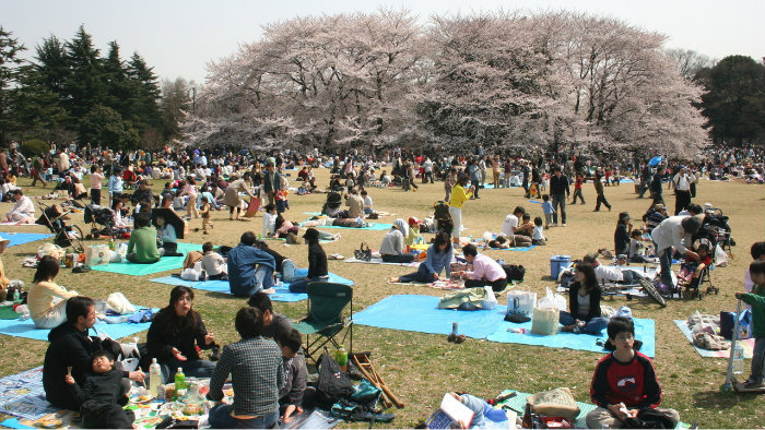 Sakura-picnic_Equinócio-da-Primavera-no-Japão-10-dicas-do-que-fazer-nessa-estação_Viajando-para-o-Japão_Vida-de-Tsuge-VDT