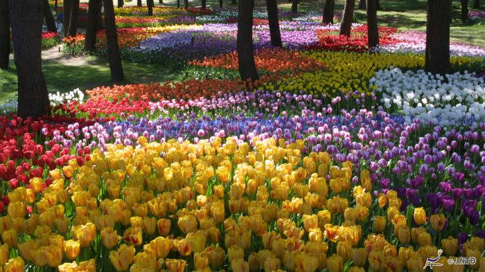 Seaside-Park-spring-m_143553-jnto_Equinócio-da-Primavera-no-Japão-10-dicas-do-que-fazer-nessa-estação_Viajando-para-o-Japão_Vida-de-Tsuge-VDT