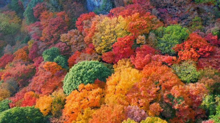 outono-no-japão_1_cultura-japonesa_Vida-de-Tsuge_VDT