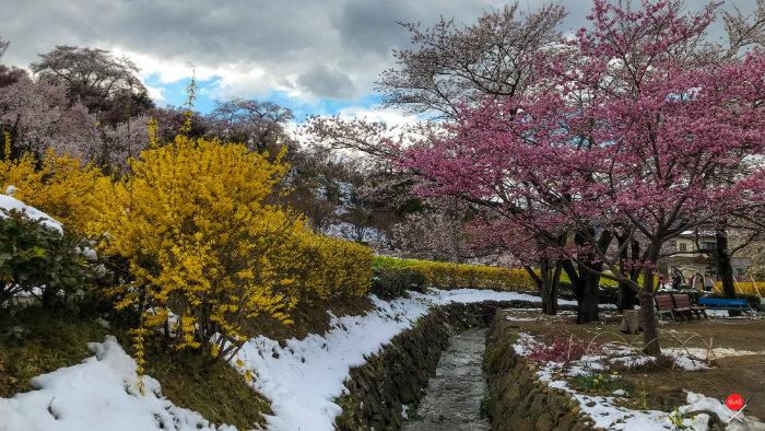 hanamiyama-park-5_explorando-o-japao_vida-de-tsuge_vdt