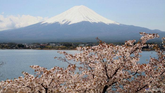 m_155431_explorando-o-sakura-matsuri_viagem-japao_vida-de-tsuge-vdt