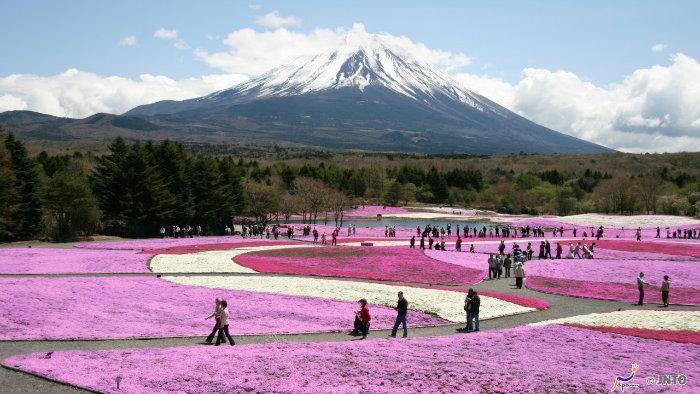 m_158857_explorando-o-sakura-matsuri_viagem-japao_vida-de-tsuge-vdt