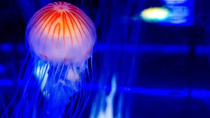 shinagawa-aquarium2_aquarios-no-japao_viagem-pro-japao_vida-de-tsuge_vdt