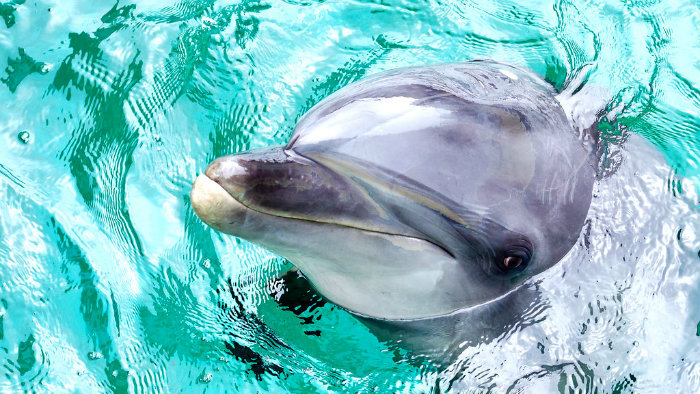 shinagawa-aquariums_aquarios-no-japao_viagem-pro-japao_vida-de-tsuge_vdt