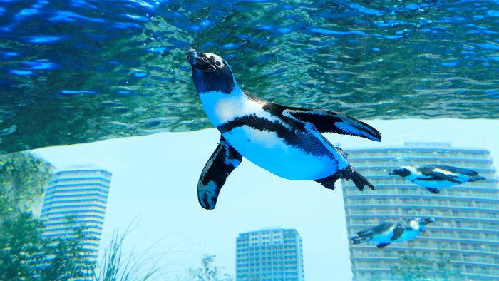 sunshine-aquarium_aquarios-no-japao_viagem-pro-japao_vida-de-tsuge_vdt