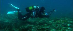 Fotografiando la fauna submarina