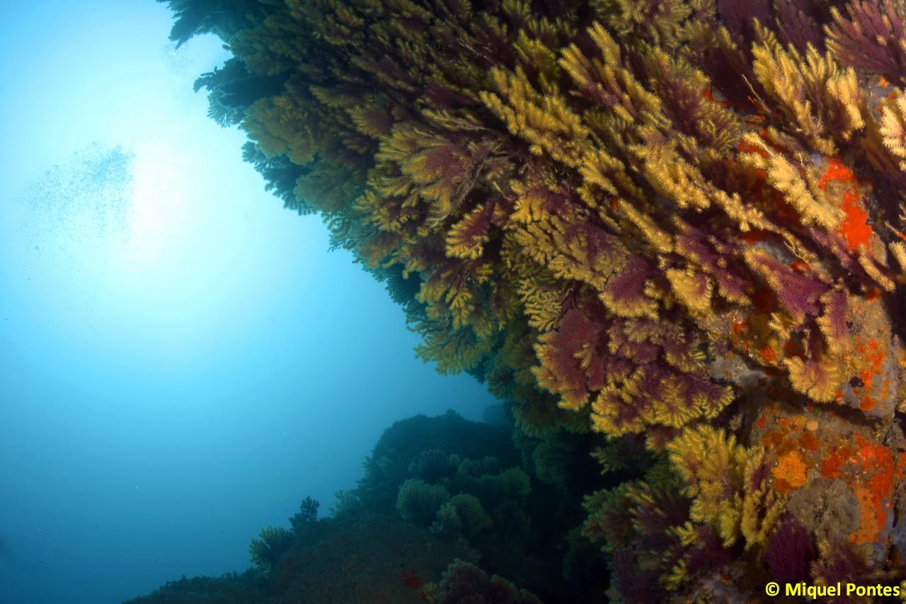 Buceo en Ullastre III: El paraíso de las gorgonias