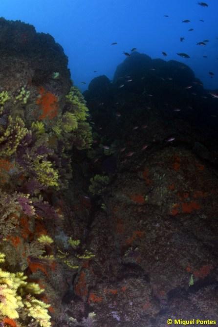 Ullastres son unas montañas submarinas que no llegan a la superficie. Por Miquel Pontes