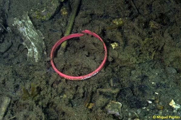 Pulsera FriendsForever y otros plásticos entre restos de toallitas