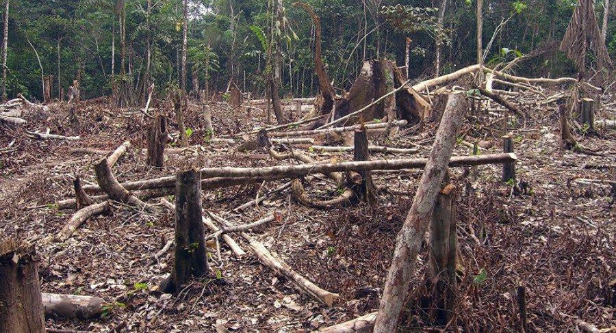 Deforestacion en el Amazonas por Matt Zimmermann (CCBY-2.0)