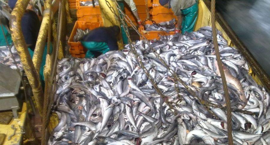 Sobrepesca por Zatoka33 (WikimediaCCBY-4.0)