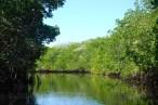 Winding around the mangrove swamp