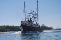 A shrimp boat coming in