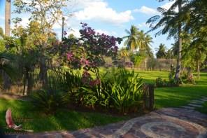 View in the Botanic Garden