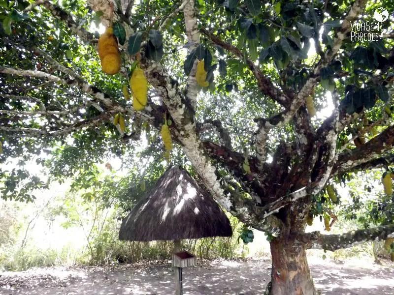Quilombo dos Palmares - Vida sem Paredes