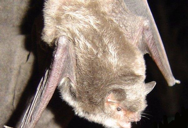 murciélagos del Paseo Ribereño de Cieza