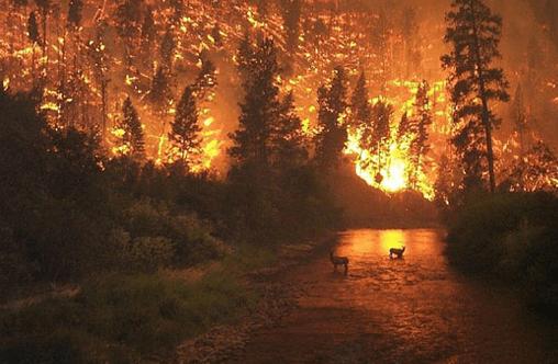 Klima: Konsekvensene av stigende temperatur
