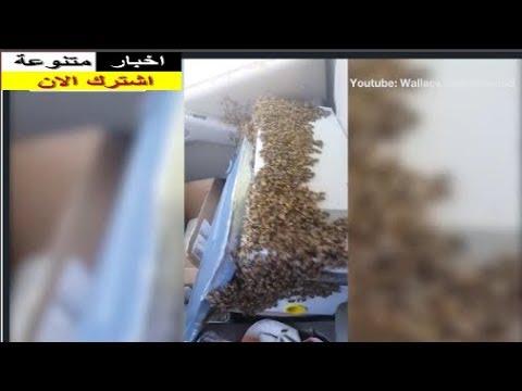 بالفيديو.. رحلة جنونية بالسيارة برفقة آلاف النحل