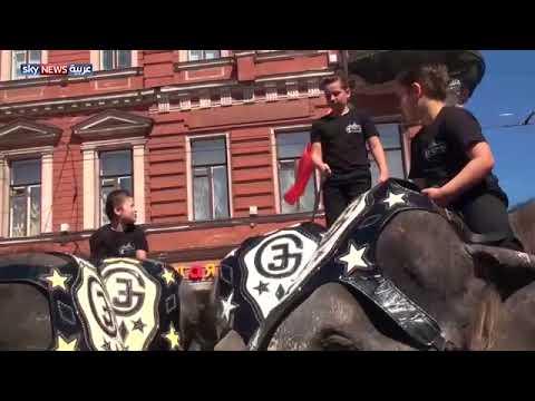 بالفيديو.. قبيل المونديال..عرض أفيال يبهر السياح في روسيا
