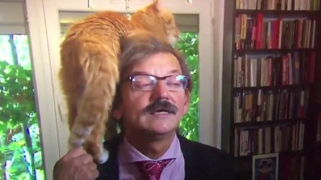 قط يضع محللًا سياسيًّا كبيرًا في موقف محرج على الهواء!