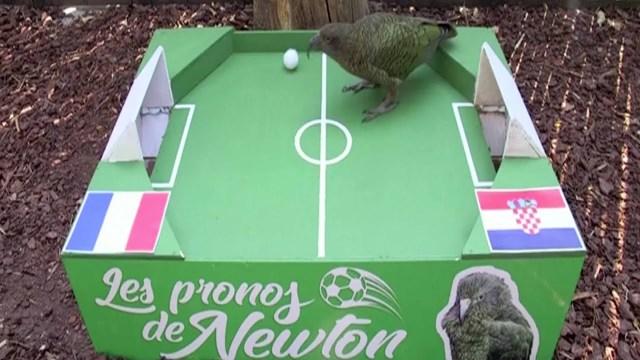 """بالفيديو… الببغاء """"نيوتين"""" يتوقع فوز فرنسا بكأس العالم"""