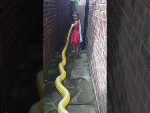 بالفيديو… صداقة غريبة بين طفلة وثعبان ضخم