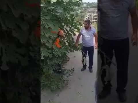 رد فعل صادم لرجل لمس شخصٌ من ذوي الاحتياجات سيارته
