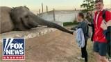فيل يصفع سائحة على وجهها في مقطع فيديو صادم