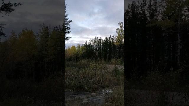 فيديو يسجل صرخات مخيفة لمخلوق غامض في كندا