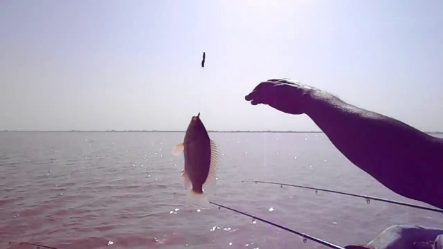 البلطي الجسور.. سمك النيل المفضل لهواة الصيد في السودان
