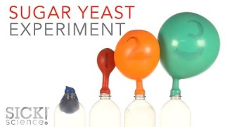 Sugar Yeast Experiment – Sick Science! #229