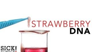 Strawberry DNA – Sick Science! #114