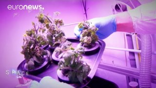 ESA Euronews: Growing food in space