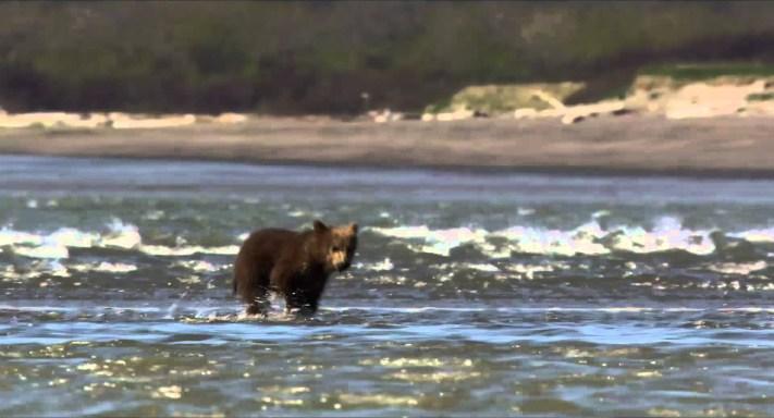 Αρκούδες – Bears – 2014 Trailer (Greek subs, Full HD)