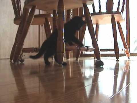 Kitten afraid of remote control mouse 2! – Γάτα-Ψεύτικο Ποντίκι 0-2