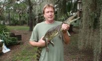 Man-Eating Crocs Spotted All Over Florida